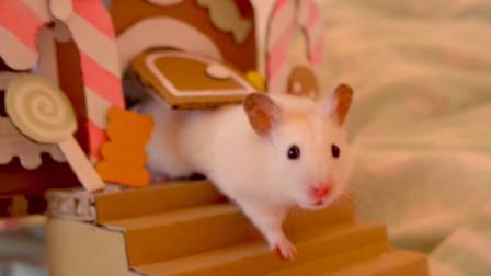 仓鼠换了新家小别墅, 但是只能爬烟囱进出了, 网友: 让你不减肥