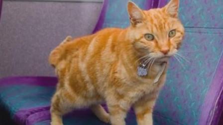 猫咪每天独自坐公交, 司机师傅每次都等它上车, 原因让人落泪!