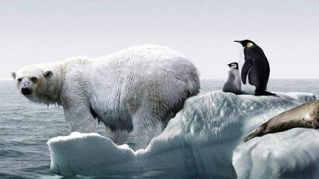 """北极曾存在过""""企鹅""""? 可惜繁殖能力太差, 早就灭绝了!"""