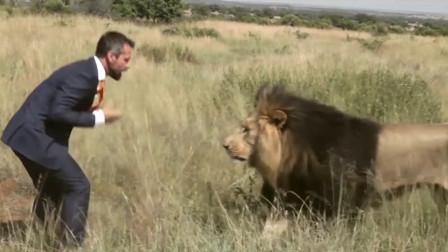 狮子时隔8年见到主人, 是福还是祸, 网友: 场面太让人激动了