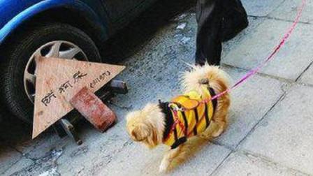 狗狗为何总爱在汽车轮胎上撒尿, 这会使轮胎腐蚀吗? 答案出乎意料!