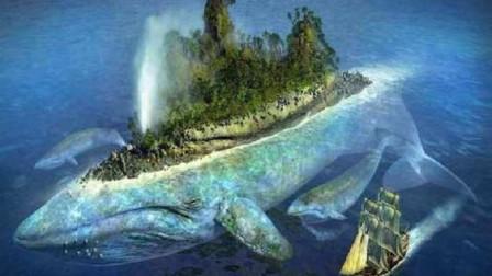 地球的大吃货,每天进食5吨食物,一旦排泄方圆50米内无人幸免