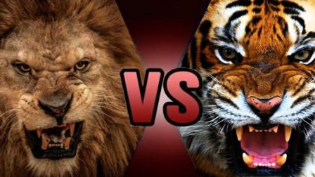 终于知道老虎和狮子谁才是百兽之王了,这个视频告诉你答案!
