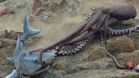 巨型章鱼与鲨鱼偶遇,捕食过程被拍到,真是大开眼界