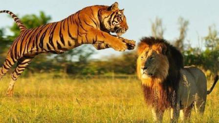 形容老虎的牙齿的成语视频