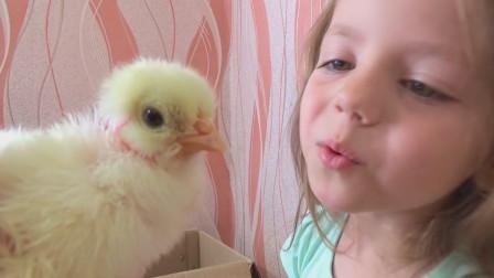 萌娃小可爱:原来小鸡是这样孵化出来的呀!小家伙们真是萌萌哒!