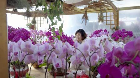 她放弃了年薪20万的人事经理工作,建立起一个世外桃园般的苗圃