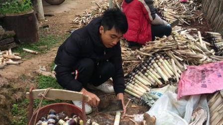农村大叔整理甘蔗种子,除了尾部种子还有一种,看看他怎么说