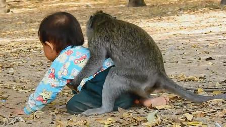 猴子把小孩当成自己的孩子,寸步不离守着小孩,镜头拍下全过程!