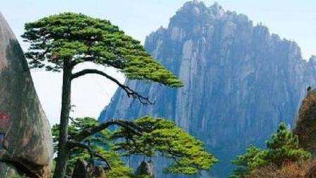 中国最值钱的两棵树:一棵花上亿元买保险,一棵日夜有警卫守护!