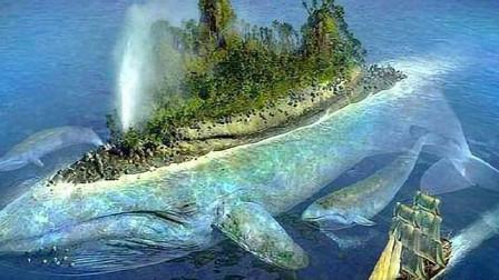 最大的吃货,一天要吃5吨食物,一旦排泄方圆50米海水都是粪水