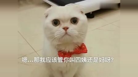 刘二豆太缺心眼了,为了弄清楚四姨是谁,活活把豆妈给气疯了