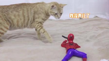 萌宠:猫妈见小奶猫被欺负,上去就是两巴掌,太有趣了!