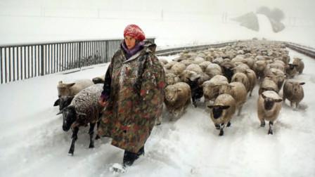 世界绵羊泛滥第一国,屠宰26年依旧超人口3倍,中国吃货:我可以帮忙