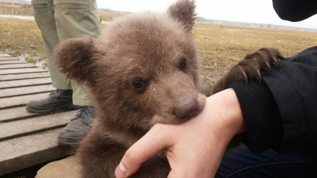 从小养到大的棕熊被坏人骗走,这群俄罗斯飞行员怒了!