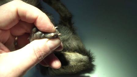 猫咪脚下被虫子钻了一个洞,看着都感觉疼