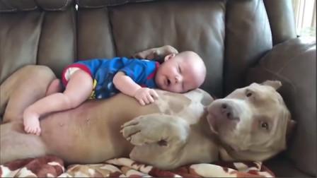 宝宝趴在狗狗身上睡觉,狗狗举动太暖心了,十分贴心地照看宝宝!