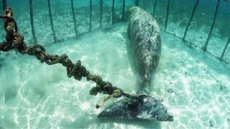 """好残忍!潜水员海底发现铁笼子,里面竟用铁锁困住一只""""美人鱼""""!"""