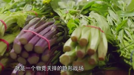 大白菜,用科技的方式,让大白成为东北爱吃的美食之一!