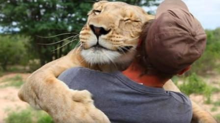饲养员不舍的将小狮子放生,十年后再次相见,忍不住抱头痛哭!