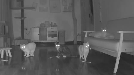 铲屎官在家里放上摄像头,意外发现猫咪还有这不为人知的一面!