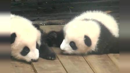 熊猫:这只大熊猫很有灵魂,敬礼是在哪学的