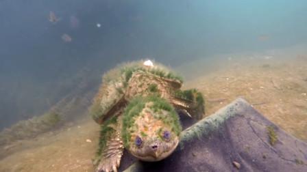 男子潜水时有了奇遇,发现一只怪异的乌龟,真实身份令人不可思议!