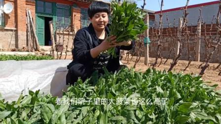 农家小媳妇用自家长的菠菜做美食,搭配花生米,这道美食你吃过吗