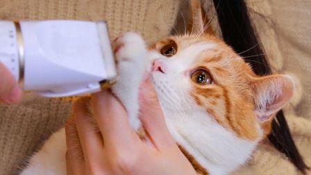 猫咪被剃脚毛,爪子奇痒暴跳如雷,直接撕烂了猫包!