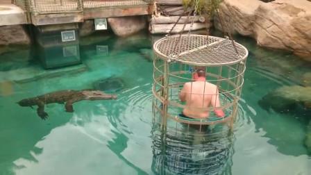 壮汉被装进笼子,跟鳄鱼亲密接触,只见缓缓被放入水中,好忐忑!