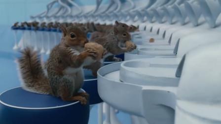 工厂雇佣100只松鼠来剥核桃,速度比机器快多了,镜头拍下全过程!