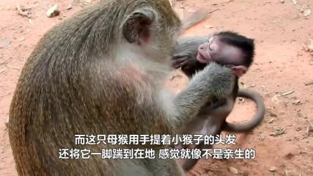 这是我见过最坏的母猴,直接将小猴子推下悬崖,太可怜了!