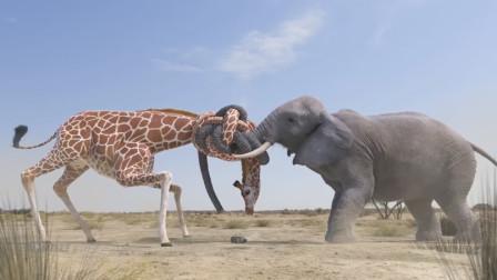 为了争夺一瓶水,长颈鹿的脖子和大象的鼻子都拧成麻花了,画面简直太美