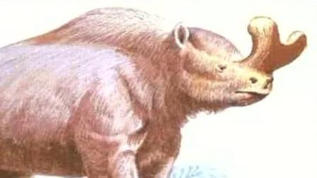 宁夏首次发现古近始新世大型哺乳动物雷兽化石 说天下 20190419 高清版