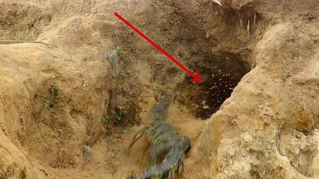 鳄鱼爬到巨蜥的老巢,5秒后鳄鱼直接腾空飞出,镜头拍下全部过程!