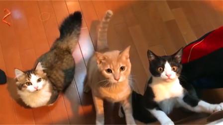 到了饭点,厨房就会出现一群吃货猫咪:铲屎的,咋还没有饭吃