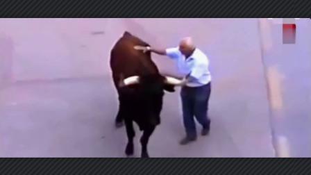 【奇闻】 斗牛突然在人群中发现喂它的老饲养员