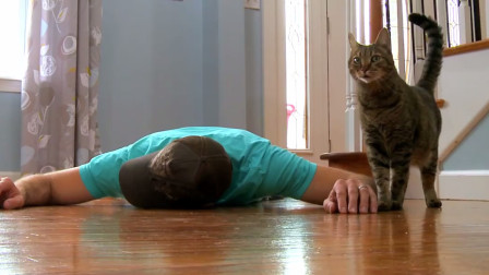 主人装死看猫咪啥反应,结果猫咪两眼一翻也死了,让人哭笑不得