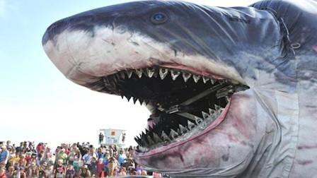 巨型石斑鱼,一口吃掉一米的鲨鱼?网友:太厉害了