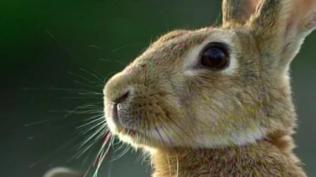 兔生巅峰!我们眼中的萌物美食,在这里却可以称王称霸!