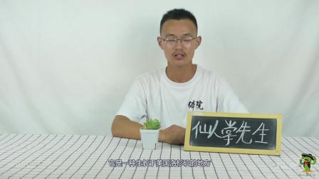 多肉植物小百科,宝草你见过吗?怎么种植宝草最好?视频