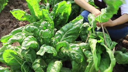 四川农村的一道特色美食,蚕豆配搭上这种食材,做出健康又营养的