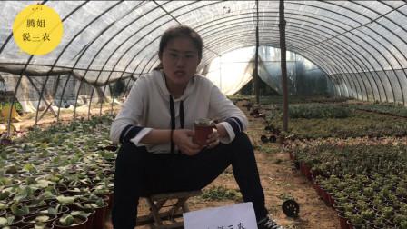 想知道更多关于多肉植物丽娜莲的养殖知识吗?看完这个就能明白!视频