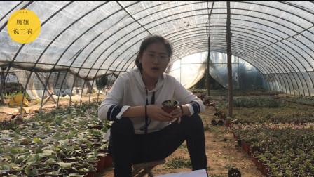 想知道更多关于多肉植物火祭的养殖知识吗?看完这个就能明白!视频