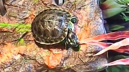 国外一男子养了10年的乌龟,感觉不对劲,仔细一看慌了!