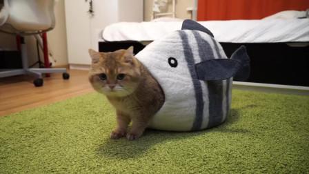猫咪:主人快来救我,我的屁股被鱼咬了