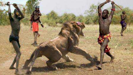 """狮子为什么害怕""""马赛人""""?跟着镜头一起眼见为实!看完你也会害怕"""