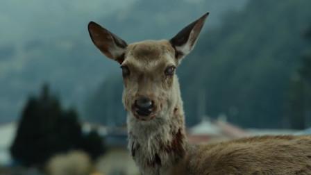 美国出现丧尸鹿,难道生化危机要来了?看看专家怎么说的