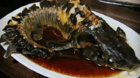 """这种鱼""""横行霸道""""1亿年,竟还是败在了""""中国吃货""""的嘴里"""