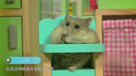 当仓鼠喝了高浓度白酒后,一定憋住别笑,镜头拍下全过程
